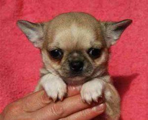 маленькая собака