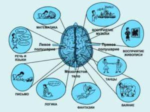 Работа полушарий мозга