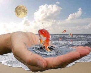 Увидеть во сне золотую рыбку