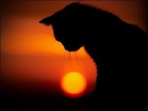 кошка и закат